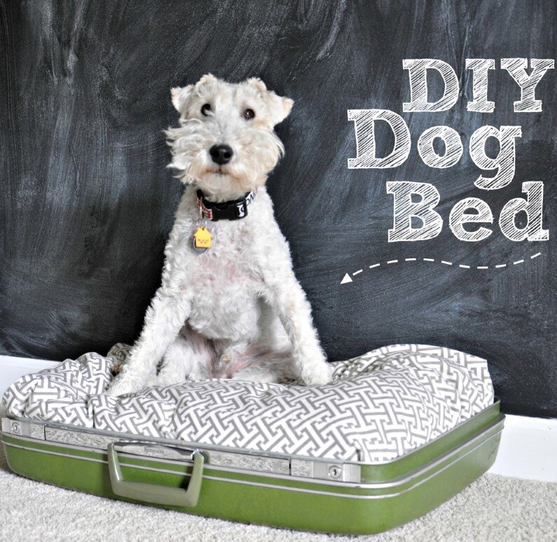 Choose the perfect location for your pet's quarters