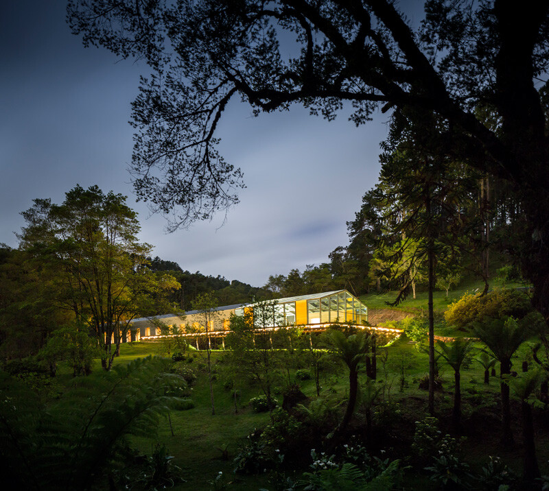 Metallic structure house in the midst of a beautiful forest of pine trees (4)