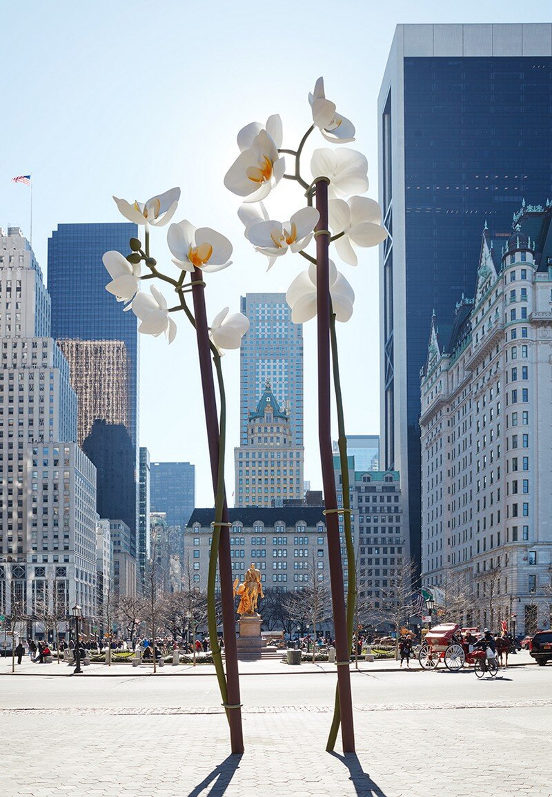 Two Orchids Herald the Entrance to Central Park in New York (1)