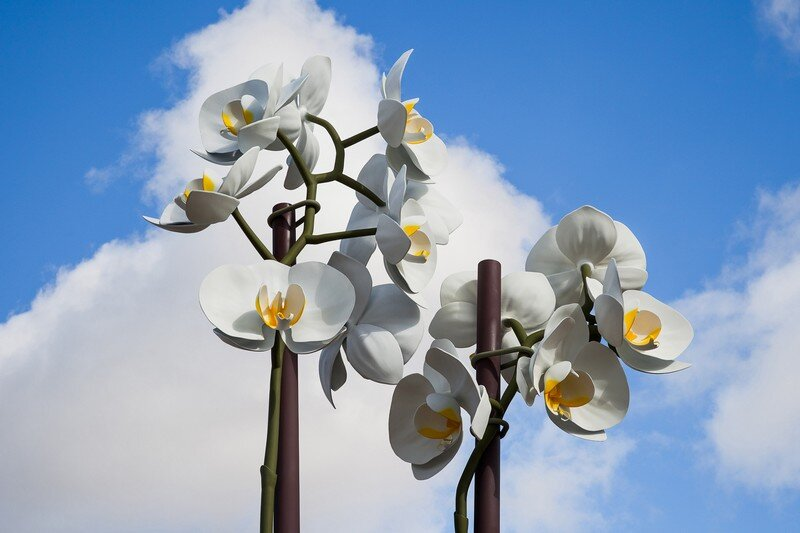 Two Orchids Herald the Entrance to Central Park in New York (6)